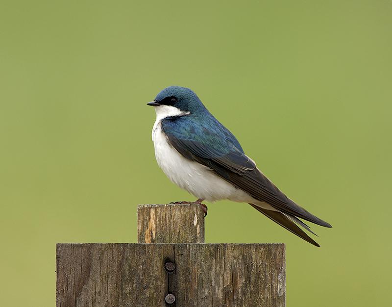 Swallow Pose Nest 2 Web.jpg
