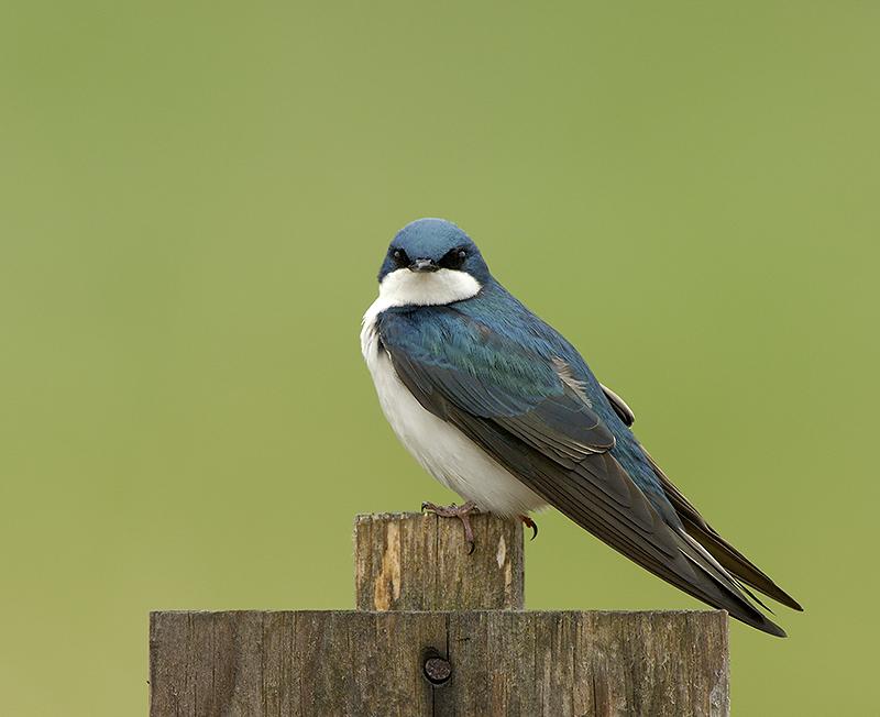 Swallow Pose Nest Post 1 Web.jpg