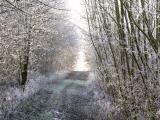 forest_walk.jpg