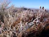 winter_busches.jpg
