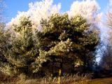 winter_trees.jpg