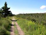 Lawrencetown Abandoned Railroad Trail.
