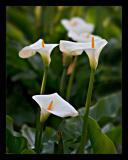 Flower 39