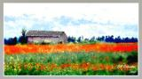 poppy fieldwdreamfilter4email.jpg