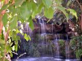 Falls - Chimp - LA Zoo - CP 5000