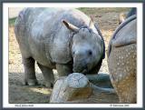 Black Rhino Babe