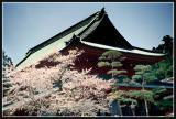 JAPON_031_MED__MED_W.JPG