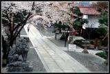 JAPON_039_MED__MED_W.JPG