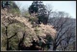JAPON_042_MED__MED_W.JPG