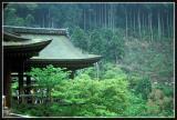 JAPON_074_MED__MED_W.JPG