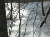 Mink Sliding down the bank