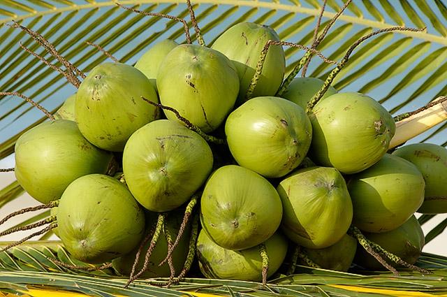coco verde2