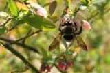 bee & a bud
