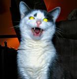 I van to bite sum catnip.