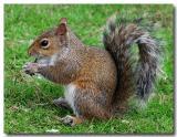 The Epcot squirrel