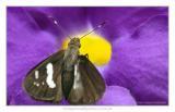 Butterfly 02.jpg