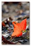 pbase roof leaf.jpg