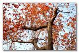 pbase tree 02.jpg