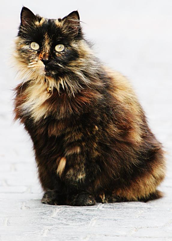 Spanish cat on the Balcon