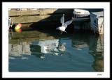 Evinrude Gull