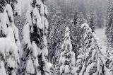 Yosemite 2005 New Year