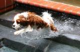 He Loves to Swim *