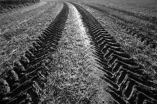 Tracks in Stubble
