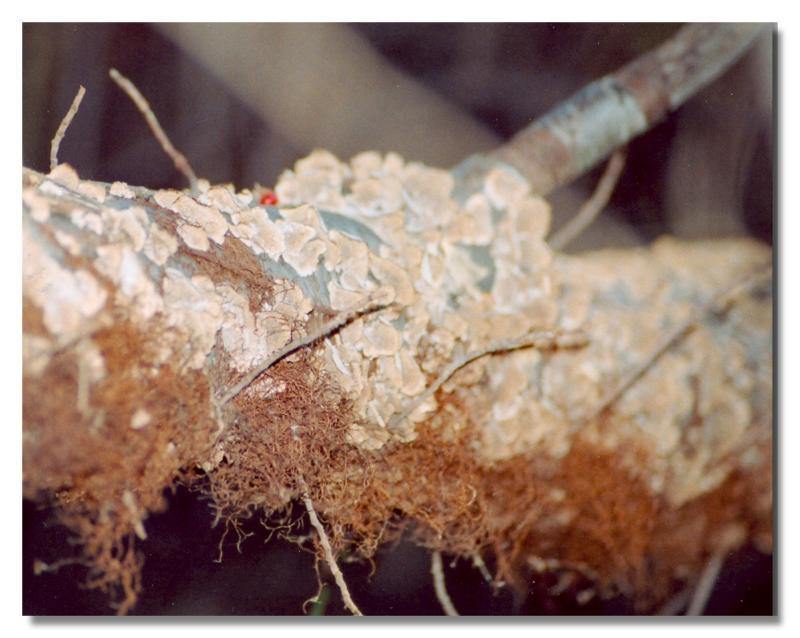 Tree Fungus.jpg
