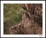 ds20050101_0038awF Rock Wall.jpg