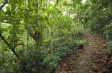 03-23-Path to the Summit of Mount Vaea