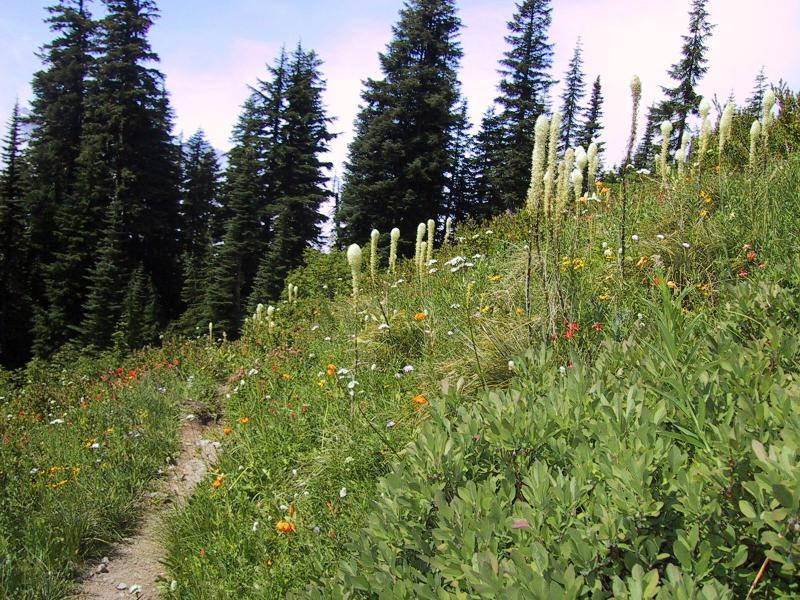 Yellowstone Cliffs wildflowers - trail where we came from