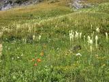 Yellowstone Cliffs - wildflower fields