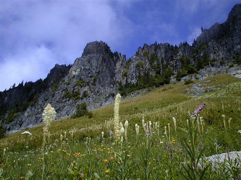 Yellowstone Cliffs - Xerophyllum.tenax - Bear Grass (RN)