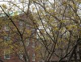 NYU Law School at Washington Square South