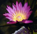 bloom2OPT.jpg