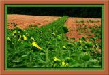 y5403_Sunflowers-04.jpg