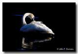 Duck-Like Birds