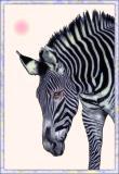 Lavender Zebra