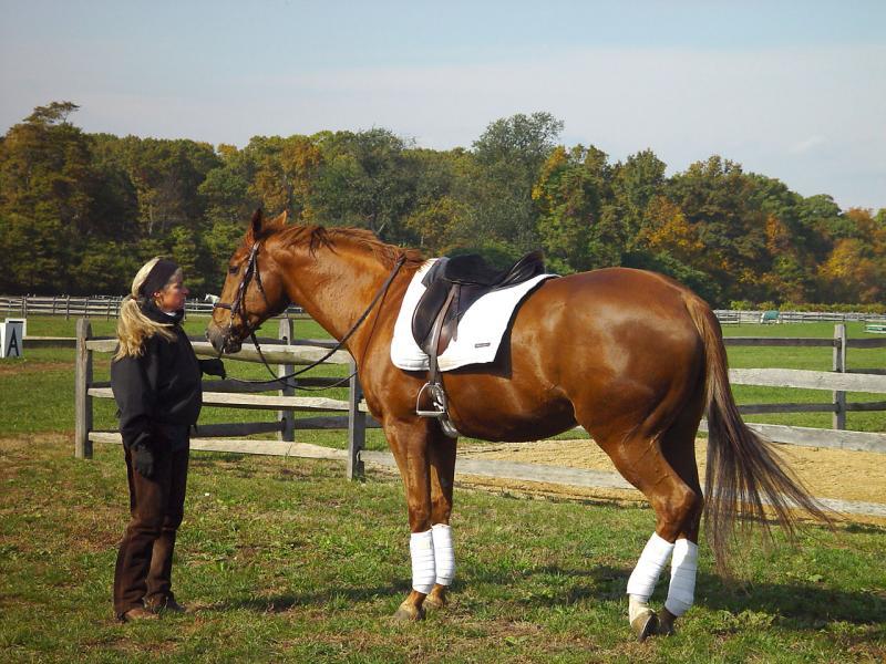 Willow Tree Farm Equestrian Center