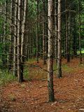 trees4708.jpg