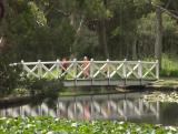 Bridge at the lily pond, Centennial Park