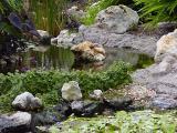 Rock Pond wb.jpg