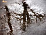 sunless puddle reflections - January 4th