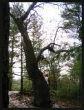 walk past a twisted tree
