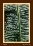 Palm tree leaf after the rain
