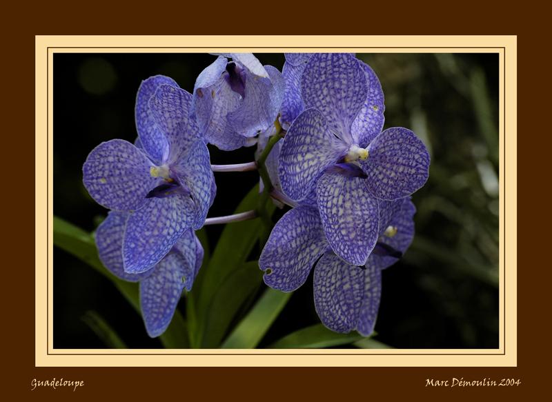 Orchid in botanical garden