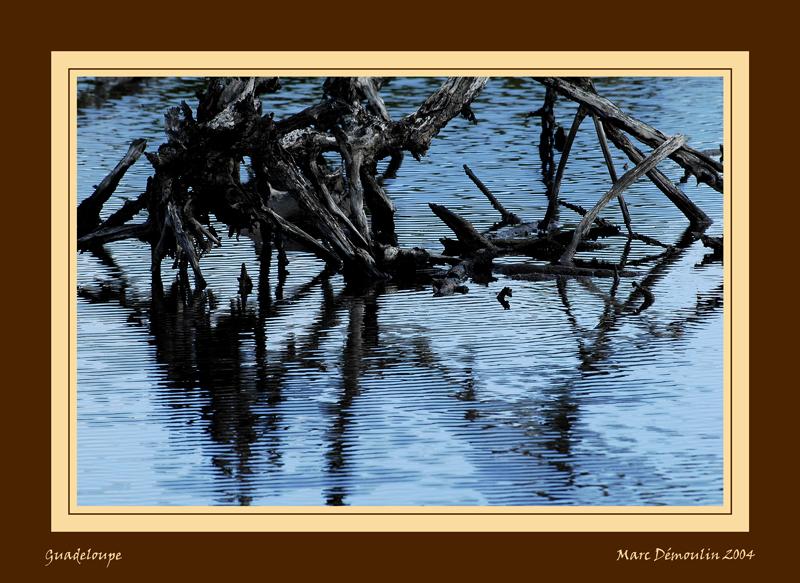 Ripples on dead woods lake