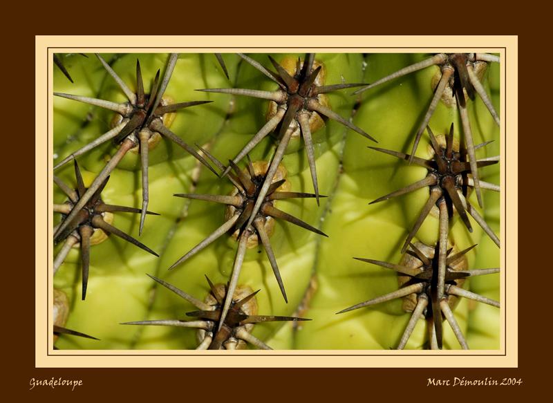 Cactus in botanical garden