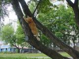 Cats and trees belong together!!