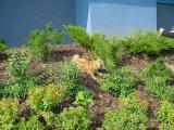 Exploring the bushes.